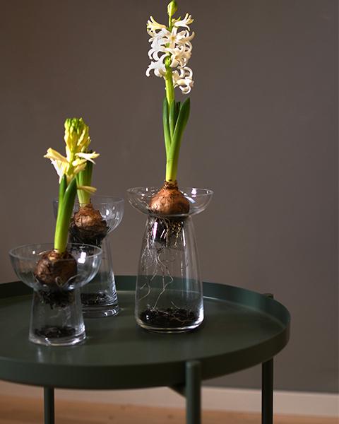 "Vase ""Ale"""