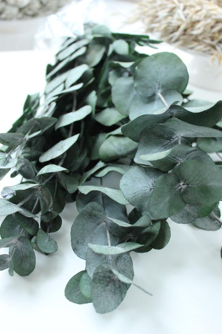 Eucalyptusbund